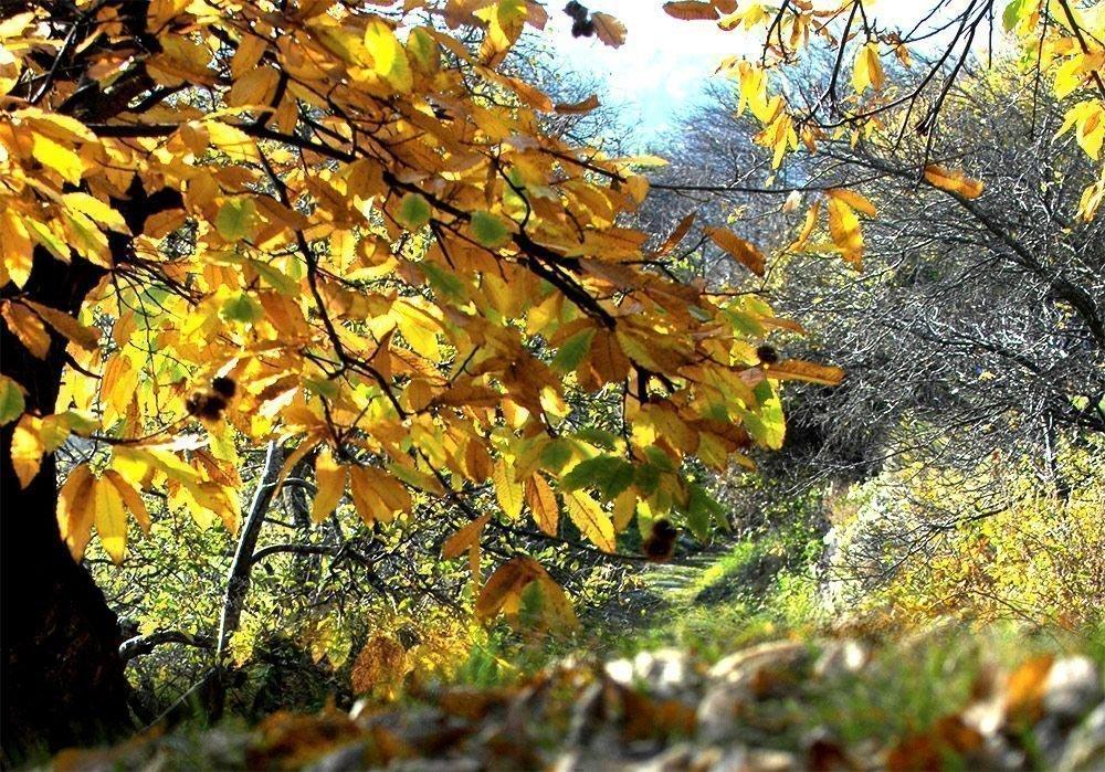 Herbst im Eisacktal – Farbenpracht in Südtirol